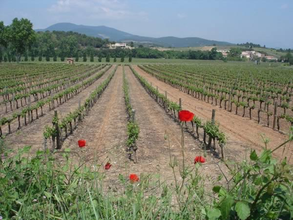 Vineyards near St Chinian